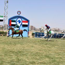 كأس رئيس الدولة للخيول العربية تنطلق من القاهرة