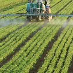 المغرب يواصل ثورته الزراعية داخل القارة السمراء