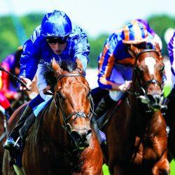 خيول الإمارات لمواصلة الانتصارات في اليوم الثاني للمهرجان
