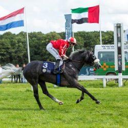 انطلاق كأس رئيس الدولة للخيول العربية الأصيلة العربية اليوم