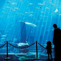 اهتمام إعلامي عالمي بعودة النشاط السياحي إلى دبي