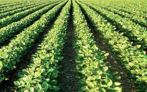 تسجيل عقود إيجار الأراضي الزراعية في إمارة أبوظبي